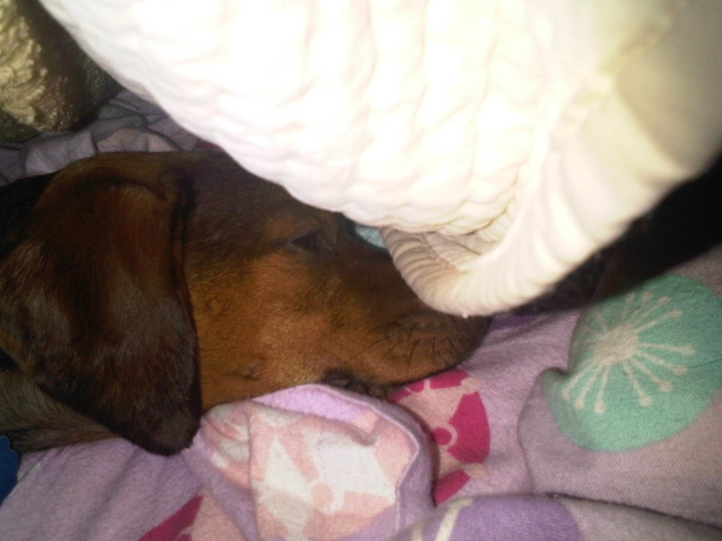 Been caught sleeping!
