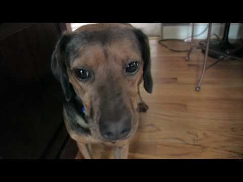 Episode 2 – Bay Park Dog Area